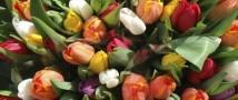 Цветы остаются самым популярным подарком на 8 марта