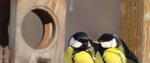 В Татарстане мужчина сбывал марихуану через птичьи кормушки