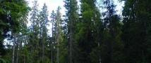 В Иркутской области горе-отец вывел своего трехлетнего сына в лес и потерял его там