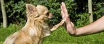 Благовещенские собаки прошли экзамены