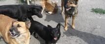 На Камчатке восьмилетнего ребенка покалечила стая бродячих собак