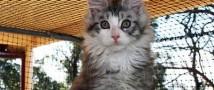 В Подмосковье планируют создать сеть мини-отелей для бездомных котов