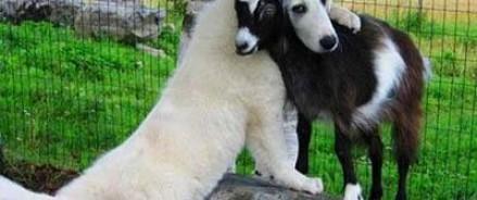Ученые отыскали у животных гормон, отвечающий за чувство любви