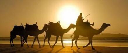 В Индонезии появилась первая жертва «верблюжьего гриппа»