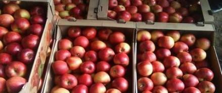 Около 200 кг героина пытались ввести в РФ из Киргизии в коробках с яблоками
