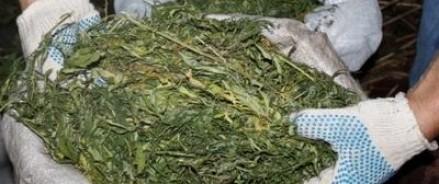 В Челябинске задержали дилера-оптовика, у которого было найдено более 100 кг марихуаны