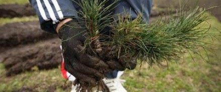 300 000 деревьев будут высажены в Калужской области за 2014 год