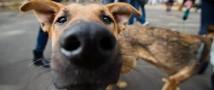 Москвичи дарят бродячим собакам любящих хозяев и дома