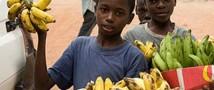 Детей Африки будут кормить ГМО-бананами