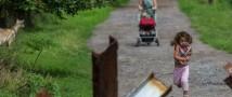 ДНР опровергла заявление Украины о создании гуманитарных коридоров