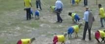 Колумбийские овцы-футболисты поучаствовали в дружеском матче