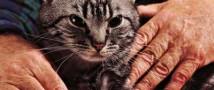 Кот-спаситель номинирован на британскую премию