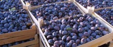 Сельхознадзор России обнаружил следы вредителей во фруктах из Молдавии и грозит временным мораторием на ввоз данного вида продуктов