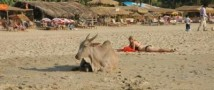 Пляжи Гоа лишатся красоток в бикини
