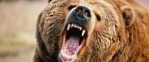 В Курильске медведь напал на 14-летнего мальчика