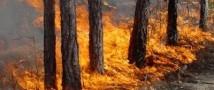 Экраны помогут бороться с лесными пожарами в Ленобласти
