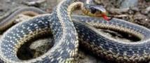 Девушка с ворованной змеей на шее повредила своим авто пожарную часть