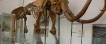 Житель Красноярска нашел в своем подвале кость мамонта