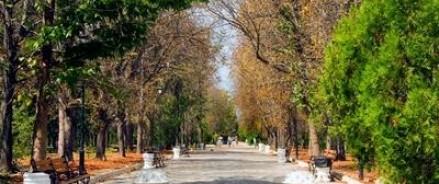 Аллею Дружбы в Симферополе засадят подаренными дубами из Кабардино — Балкарии