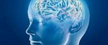 Информация о социальном статусе заложена в мозгу