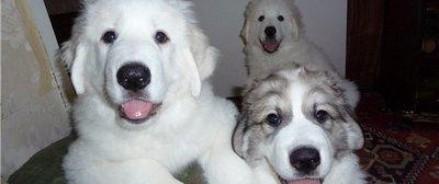 Власти Малайзии начали расследование в связи с акцией «Я хочу коснуться собаки»