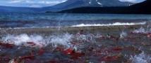Кинематографисты из Германии сняли документальную ленту на Камчатке