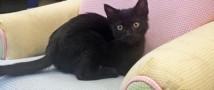 Ветеринары реанимировали кошке с помощью водки