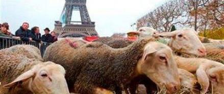 К Эйфелевой башне были привезены десятки овец