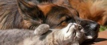 Швейцария: защитники животных бьют тревогу