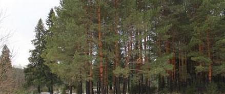 В Удмуртии было раскрыто зверское убийство брата и сестры 13 и 11 лет