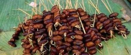 Еда будущего: ждите на своей тарелке насекомых