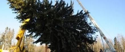 Главная елка страны была доставлена в Кремль Дедом Морозом