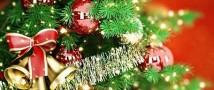 Поразительные елки: чем удивляют зеленые красавицы