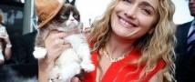 Знаменитый кот принес владелице многомиллионный доход