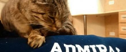 Кошка Матроска стала новым лицом рекламной кампании