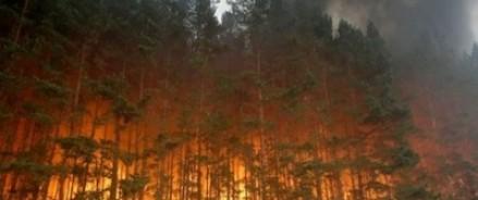 Детский лагерь в Нижегородской области оказался в зоне пожара