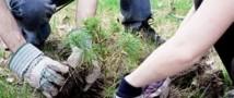 Калужскую область украсит «Лес Победы»