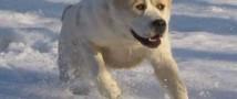 Хозяину вернули собаку, которая потерялась в 40-градусный мороз и отсутствовала 2 недели