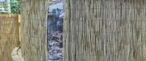 Калининградский зоопарк остался без рифовой акулы