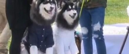 Крупнейшая в истории свадьба собак прошла в Пекине