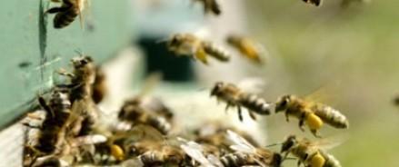 В Великобритании кражу ульев предотвратили пчелы