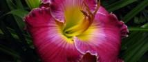 Выставка лилейников, экскурсии, цветущая папайя — уикенд в «Аптекарском огороде»