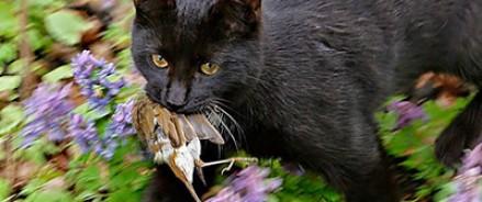 Кот, похищавший утят в «Аптекарском огороде», нашёл хозяев