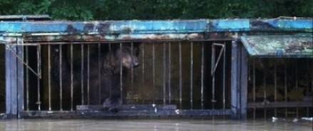 В Уссурийске постепенно эвакуируют животных из затопленного зоопарка