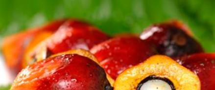 Российским производителям могут запретить использовать пальмовое масло и Е-добавки