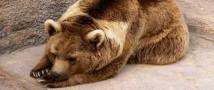 Дикий зверь застрелен в торговом центре Хабаровска