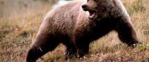 Медведь-шатун напал на охотника