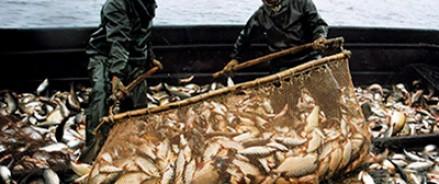 Квоты на вылов морепродуктов будут повышены