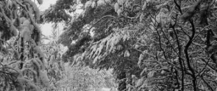 Глава Карелии вместе с жителями выйдет на борьбу со снегопадом