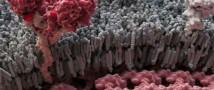 Изобретено лекарство от вируса лихорадки Эбола